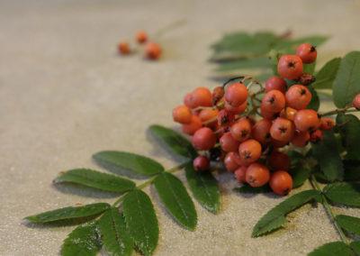 Mało znane rośliny owocowe – cześć 1