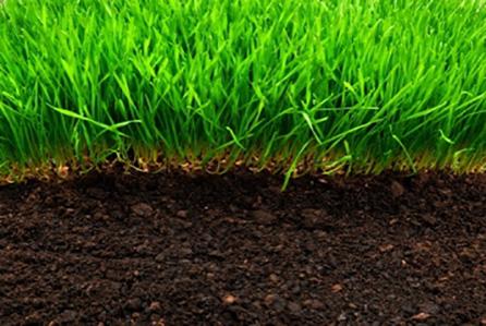 Idealny trawnik – przygotowanie terenu