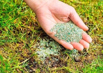Jesienne nadsiewanie trawnika