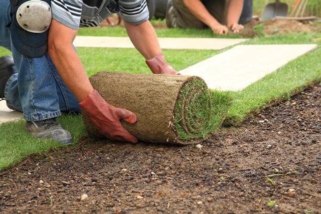 Jak skutecznie założyć trawnik z rolki?