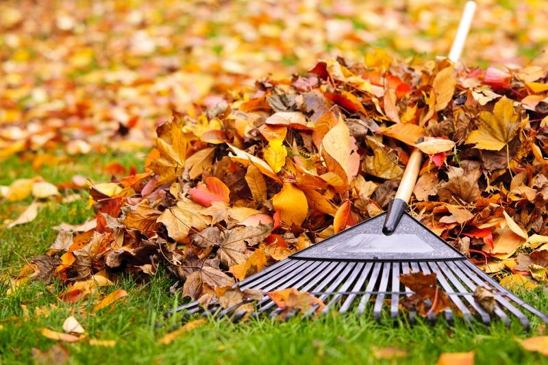 Jak zadbać o trawnik jesienią