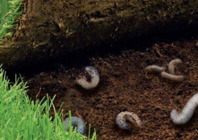 Pozbywamy się insektów z trawnika bez chemii!