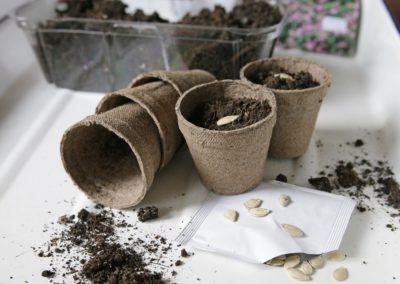 Samodzielny wysiew i rozsada roślin