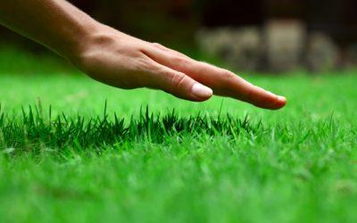 Zadbaj o swój trawnik w 10 dni (część 2)