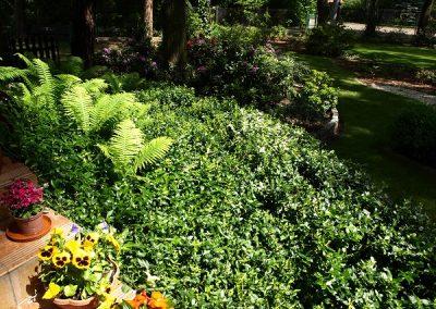 Rośliny zadarniające i okrywowe (część 1)